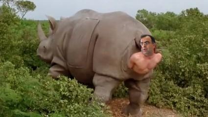 RhinoYoussef