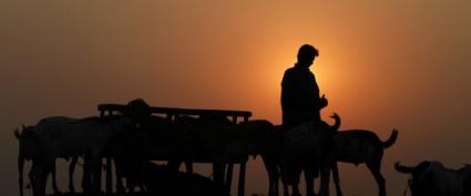 Pakistan Eid Al-Adha