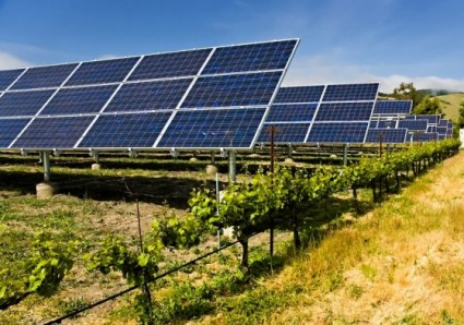 solar-panels-agriculture-560x393