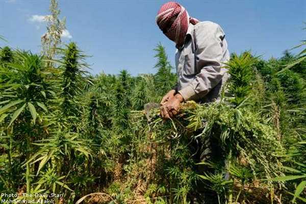 lebanon-marijuana-green-08-07