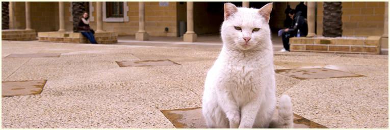 aub cat