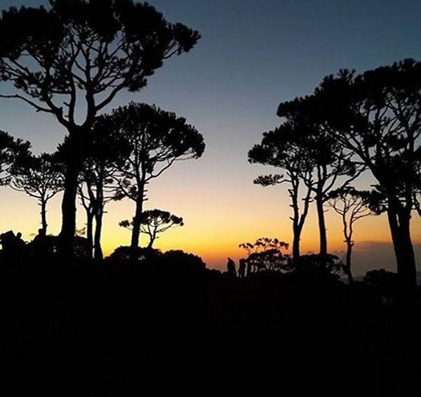 pineforest sunset - Copy
