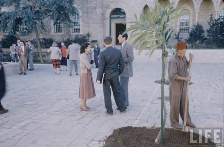AUB 1950
