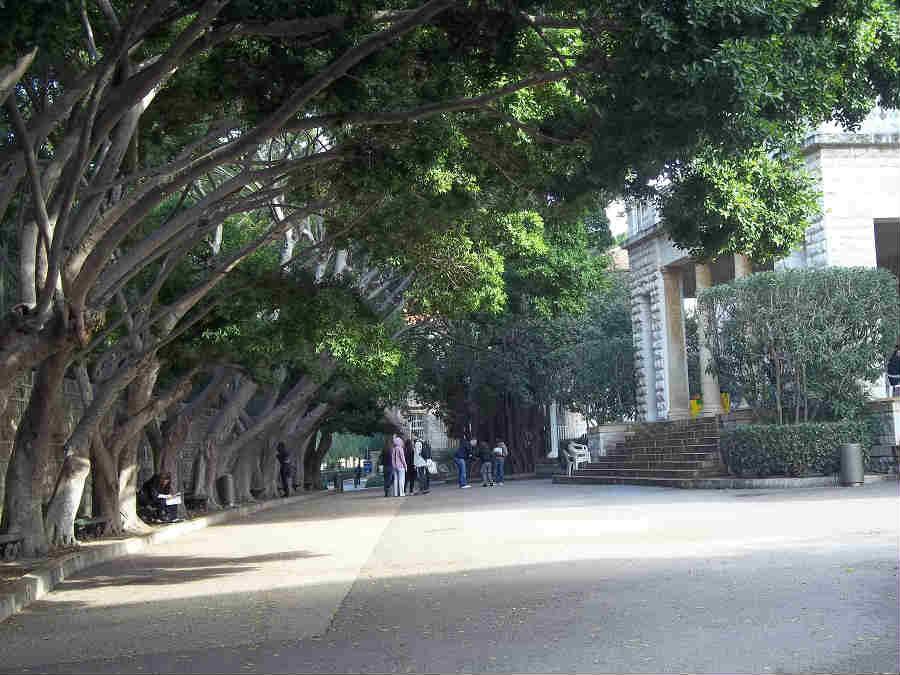 AUB trees