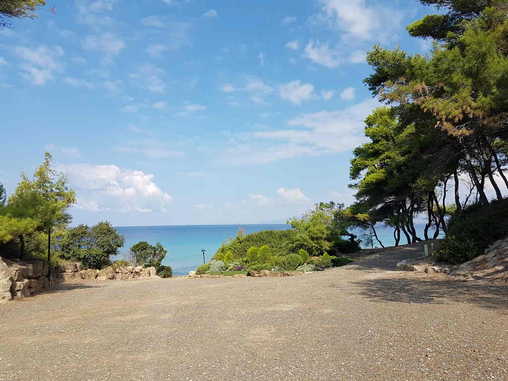 aleppo-pine-forest-meets-aegean