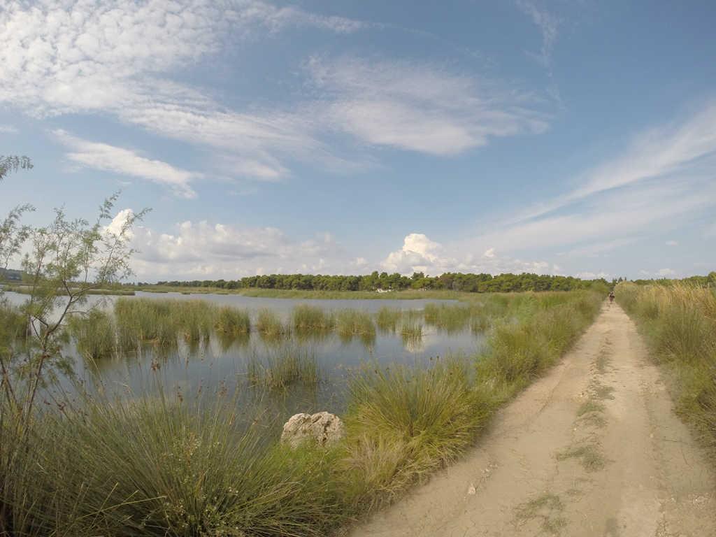 wetlands-1