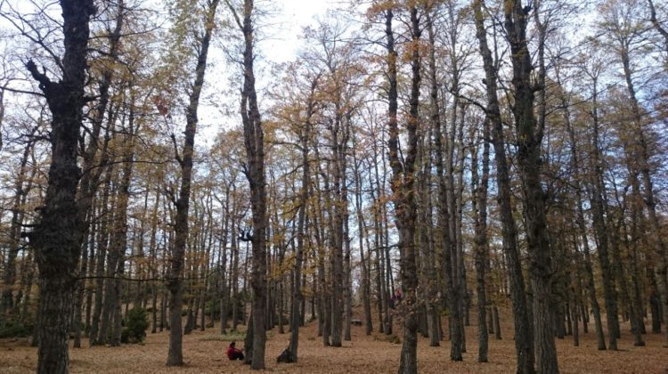 The Golden Forest – A hike from Dahr El Keif to Azer Forest