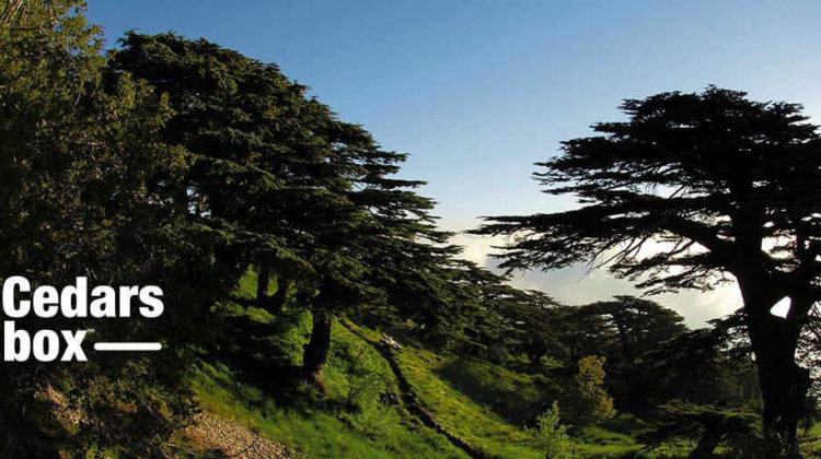 #UberCEDARS: Plant Your Own Cedar Tree This Independence Day