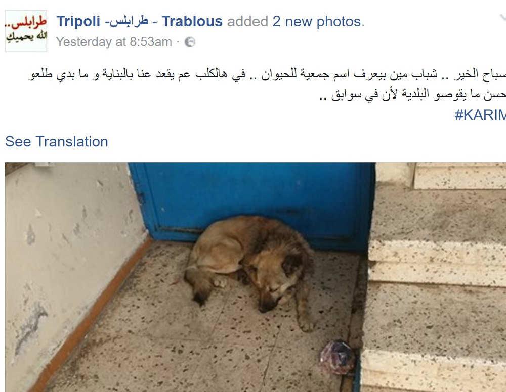 tripoli-dog