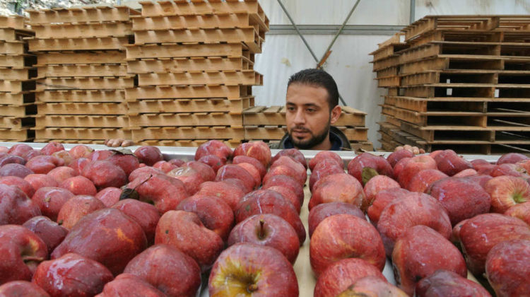 UAE Bans Import of Apples from Lebanon