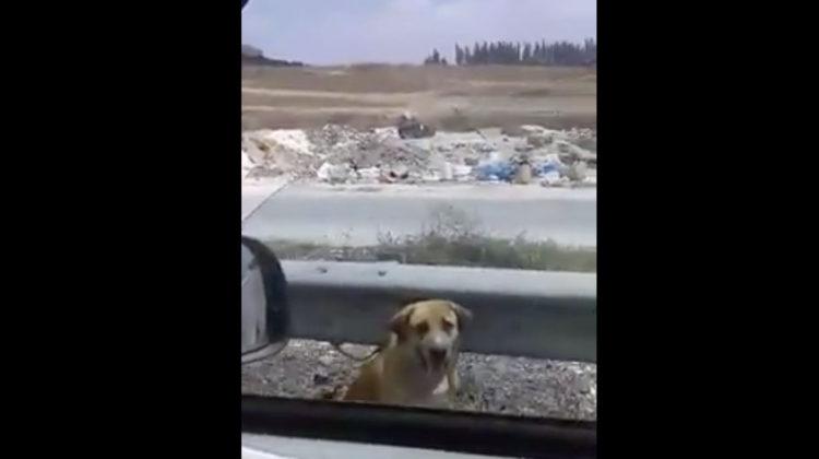 Dog Chained on Adloun Highway