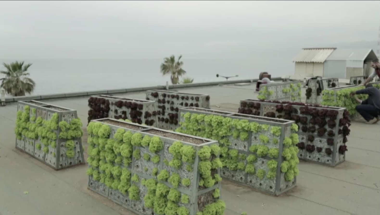 Beirut Planting Roofs Blog Baladi