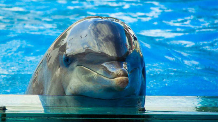 Say no To the Dolphin Show!