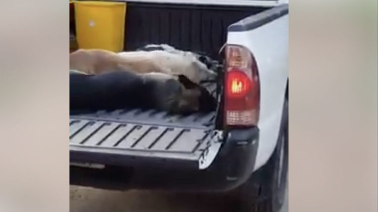Ghobeiry Municipality Issues Statement, Says They Didn't order the Killing of Stray Dogs