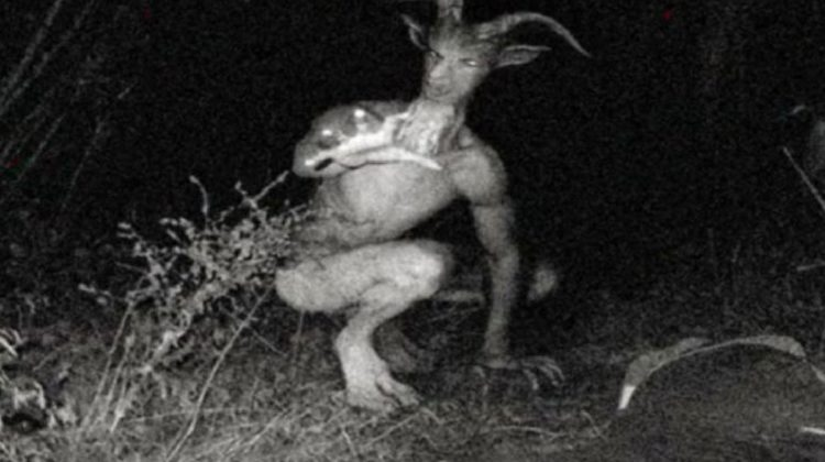 Stop Spreading that Stupid #Goatman Story in Choueifat