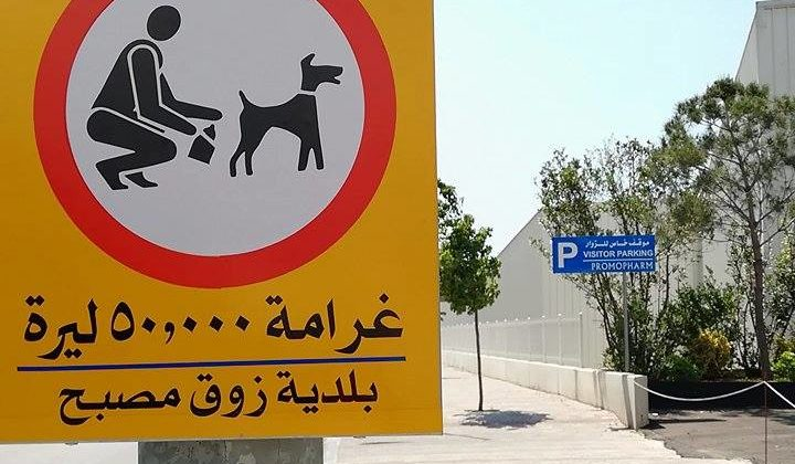 Zouk Mosbeh is Fining Dog Owners Who Don't Pick Up Poop