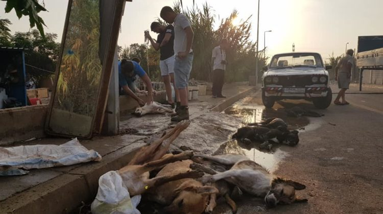 Over 90 Dogs Poisoned, 40 Already Dead, at Tripoli Dog Shelter