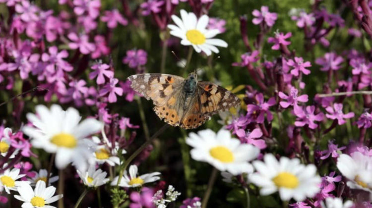 Swarms of Butterflies Invade #Lebanon in Numbers Unseen For 100 Years