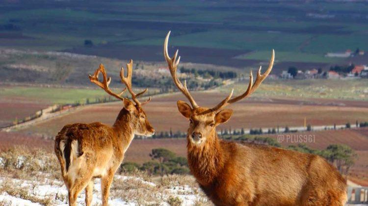 Aana Reserve in the West Bekaa