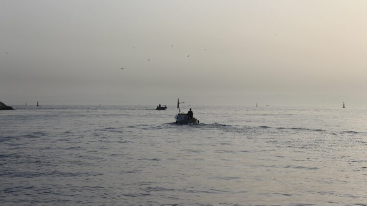 Follow Sayyad Samak on Twitter & Book Your Fishing Trips