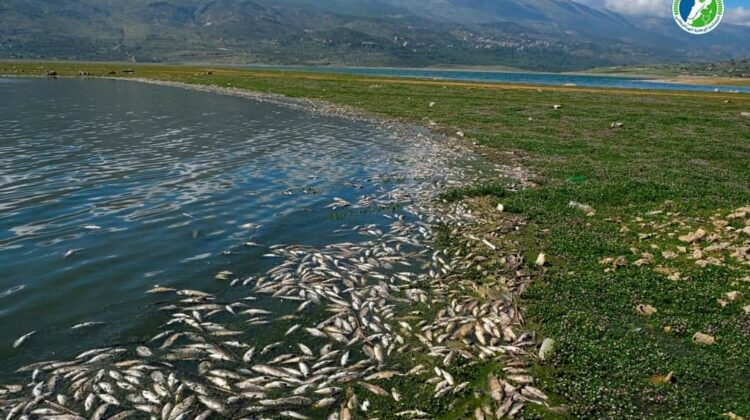 "The Lebanese Authorities Spent Over 400 Million Dollars to ""Clean"" The Litani River"